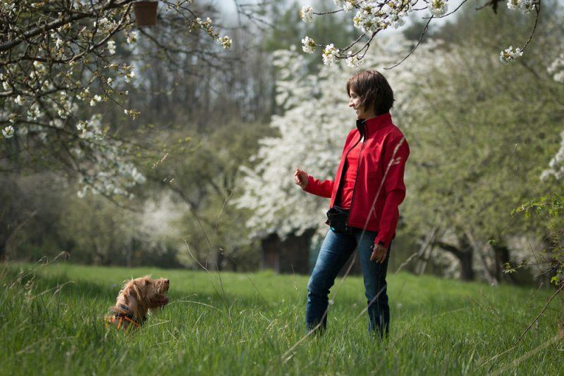 Finde Verstärker für deinen Hund