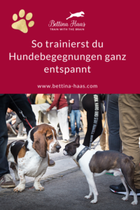 Hundebegegnungen