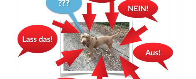 Hund eingrenzen?