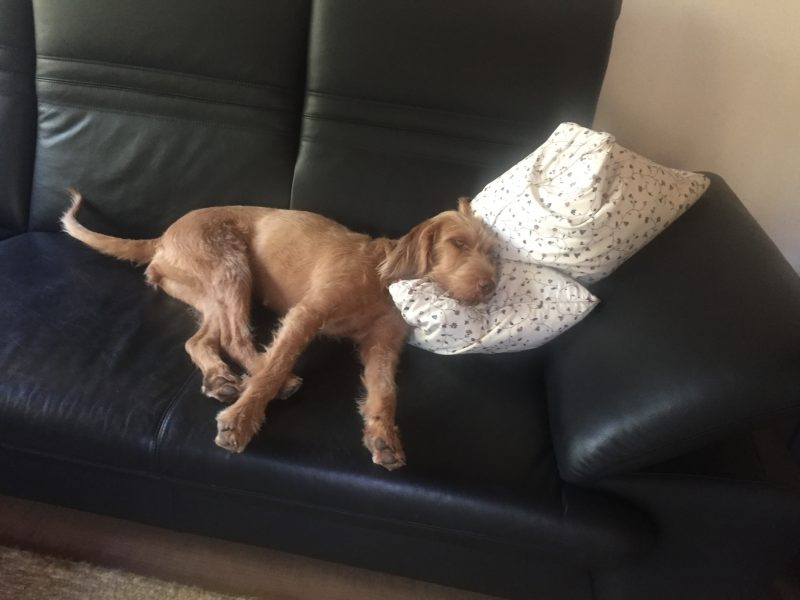 Sofa erlaubt?