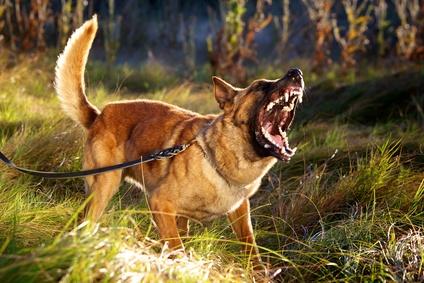 Hundebegegnung sollte nicht so aussehen