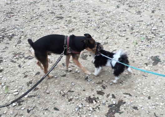 Hundebegegnung friedlich