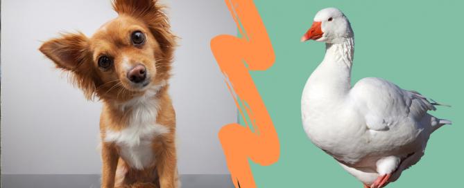 Ist eine gute Beziehung zum Hund wichtig?